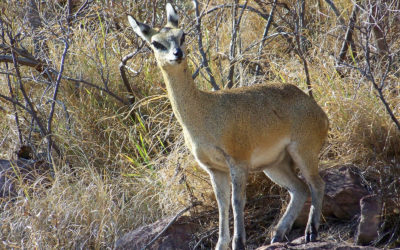 Tour 51: 12 Day Northern South Africa – Central Botswana Wildlife 4×4 Camping Tour