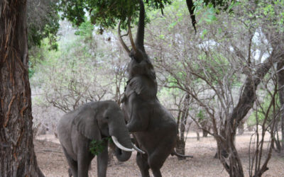 Tour 57: 20 Day Zimbabwe National Parks Wildlife 4×4 Wild Camping Tour
