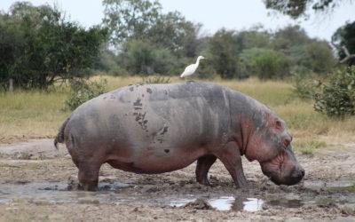 Tour 55: 21 Day Botswana, Namibia & Zimbabwe National Parks Wildlife 4×4 Tour
