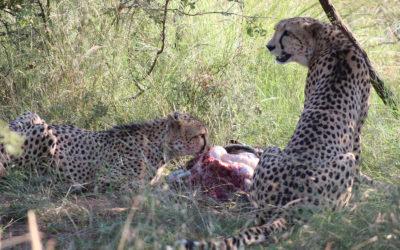 Tour 40: 12-25 Day South Africa Meerkat & Wildlife Tour