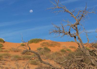 Tour 01 - Kgalagadi Transfrontier Park - Dune landscape