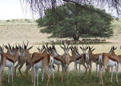 Tour 06 - Kgalagadi - Augrabies - Springbok