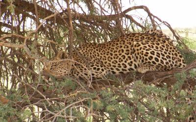 Tour 8: 9 Day Kgalagadi – Mokala National Park Wildlife Tour