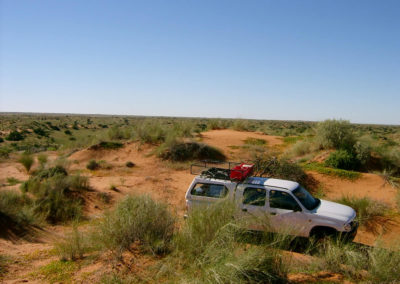 Tour 10 - Kgalagadi - Nossob Eco 4x4 - Kalahari Duneveld
