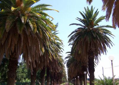 Tour 15 - Day Tours - Upington & Augrabies - Palm Lane