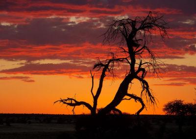 Tour 22 - Four Deserts - Kalahari Sunset