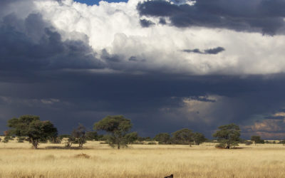 Tour 25: 16 Day Arid Parks & Reserves Tour