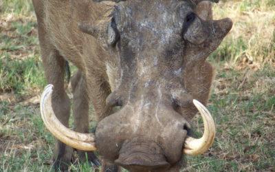 Tour 46: 14 Day Northern South Africa Parks & Kruger Park Wildlife Tour