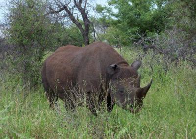Tour 47 - Kgalagadi - Etosha Parks - Black Rhino, Etosha Park