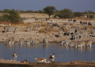Tour 47 - Kgalagadi - Etosha Parks - Okaukuejo waterhole, Etosha Park