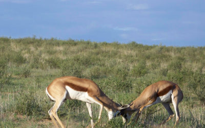 Tour 53: 12 Day Botswana Wildlife 4×4 Camping Safari (Southern & Central Parks)
