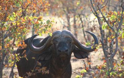 Tour 44A: 8+ Day Kruger Park Wildlife Tour