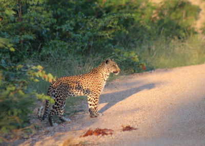 Kalahari Tours & Travel | tour operating company | guided tours | Green Kalahari | Northern Cape | South Africa | tailor-made tours | 4x4 | self drive convoy tours | Kalahari Desert | Wildlife Parks & Reserves | responsible tourism | accommodation | bed and breakfast | Upington | South Africa | Swaziland | Namibia | Botswana | Zimbabwe | Wildlife | Game viewing | South African Preditors | Cammspannen | Mazurka Waters | De Duine B&B