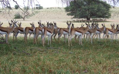Tour 04B: 5 Day+ Kgalagadi – Tashebube Lodges Exclusive Tour
