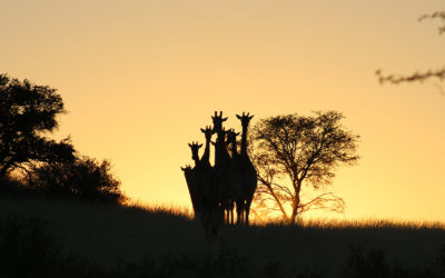 Tour 54: 17 Day Botswana Wildlife 4×4 Camping Safari