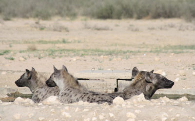 Tour 04C: 7 Day+ Kgalagadi – Xaus & Tashebube Lodges Exclusive Tour