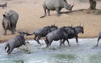 Tour 45: 13 Day Kwazulu Natal Parks & Kruger Park Wildlife Tour