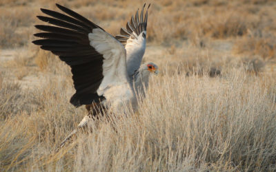 Tour 63: 13 Day South Africa Birding Tour