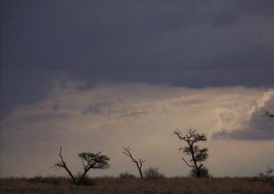 Tour 01 - Kgalagadi Transfrontier Park - Landscape -