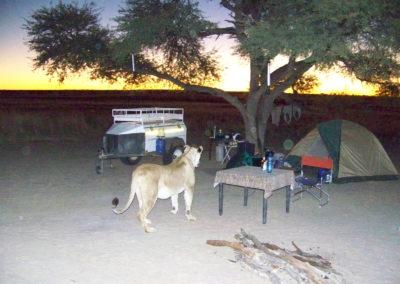 Tour 02 - Kgalagadi Transfrontier Park - Polentswa - Lioness visiting - Copy