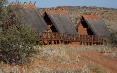 Tour 04A: 3 Day+ Kgalagadi – Xaus Lodge Exclusive Tour