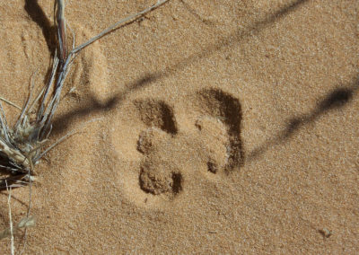 Tour 04 - Kgalagadi Transfrontier Park - Xaus Lodge - Buckspoor Spider