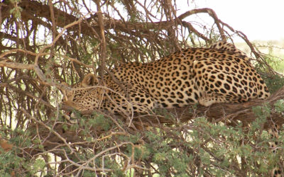 Tour 8: 9 Day Kgalagadi – Mokala National Park Wildlife Tour