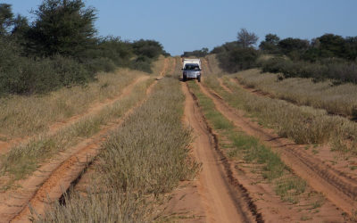 Tour 13: 10 Day Kgalagadi – Mabuasehube – Kaa Game Viewing Trail 4×4 Tour
