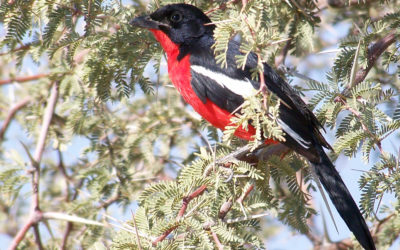 Tour 17: 2 Days Witsand Nature Reserve Tour