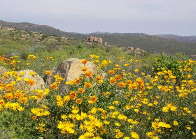 Tour 20 - Namaqua Flower - Flowers Namaqua National Park
