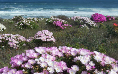 Tour 20: 4 Day+ Namaqualand Flower Tour