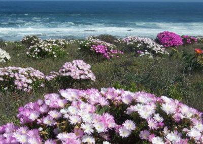 Tour 20 - Namaqua Flower - Flowers West Coast, Namaqua National Park