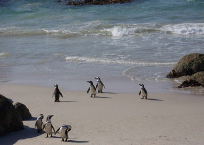 Tour 34 - Kalahari - Cape Town - Jackass Penguins, Boulders, Cape Town