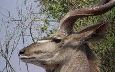 Tour 35: 12 Day Kalahari – Port Elizabeth Wildlife Tour