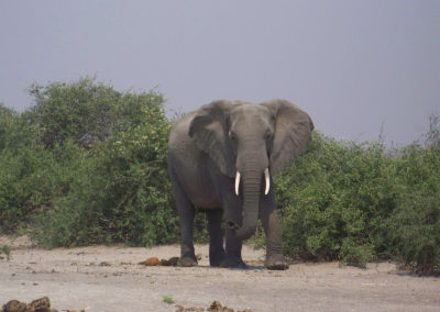 Tour 35 - Kalahari - Port Elizabeth - Elephant - Addo Park