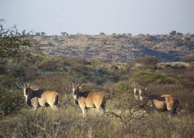 Tour 37 - Cape Town - Kimberley - Eland, Mokala Park