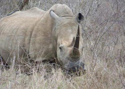 Tour 37 - Cape Town - Kimberley - White Rhino, Mokala Park