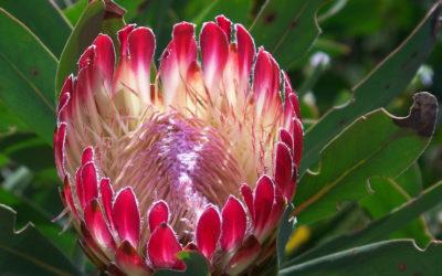Tour 39: 12 Day Kimberley – Port Elizabeth – Cape Town Wildlife & Coastal Parks Tour