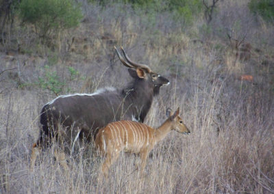 Tour 45 - KwaZulu -Natal & Kruger - Nyalas, Ithala Game Reserve