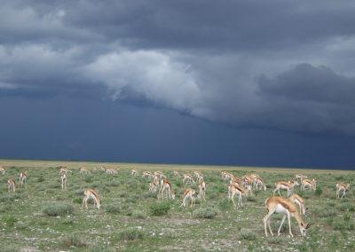 Tour 47 - Kgalagadi - Etosha Parks - Springbok, Etosha Park