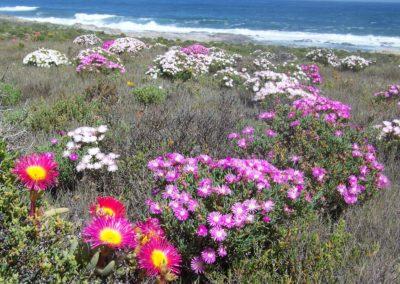 Tour 30 - Caracal & Diamond Coast 4x4 Trail - Spring Flowers, West Coast, Namaqua Park