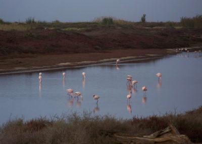 Tour 32 - Kalahari - Diamond Coast 4x4 Tour - Flamingos, Orange River Estuary